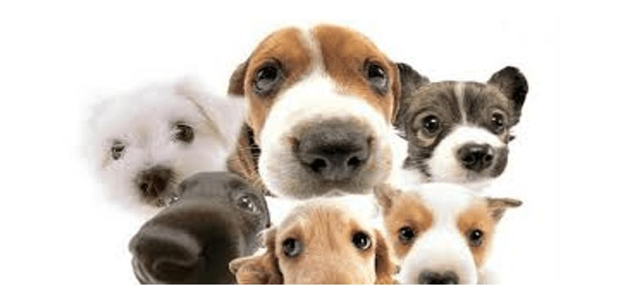 Este sábado castración de mascotas